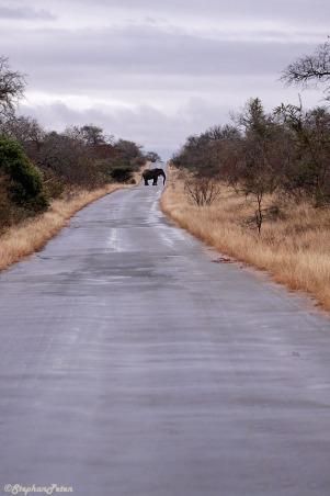 afrique2elephant