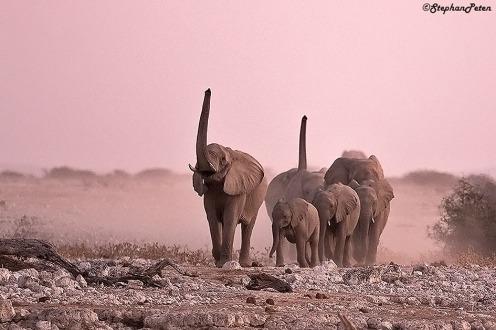 elephantnamibie-01-07-15