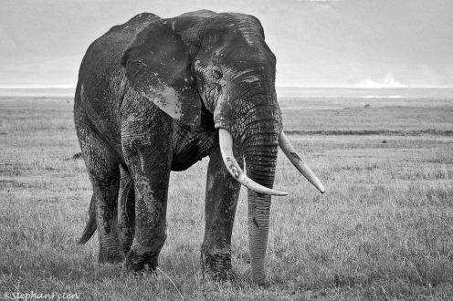 elephantserengeti-27-11-09