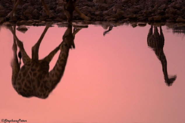 girafenamibie-06-07-15