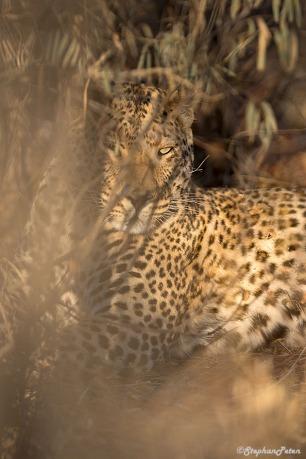 leopardnamibie-1-07-15